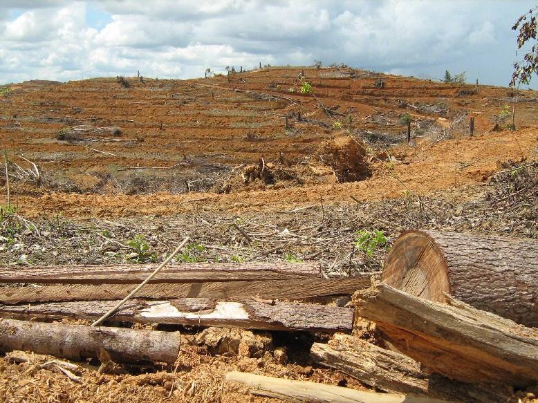 Plantáže palmy olejné firmy Agro Indomas