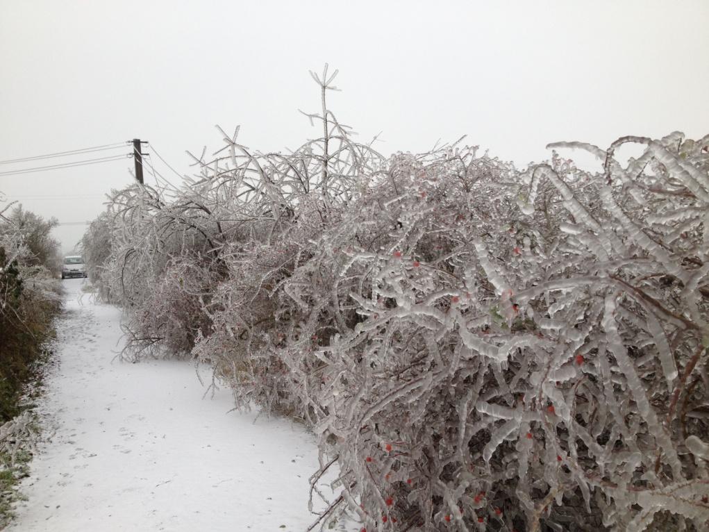 ledovka, sníh, námraza, elektrické vedení