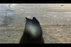 Still z videa Davida Přílučíka s názvem Kočka