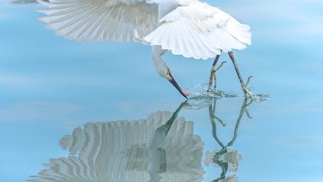 Pták, lovec, vodní hladina, příroda