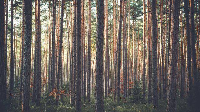 Josef Kroutvor: Lesní putování (ilustrační foto)