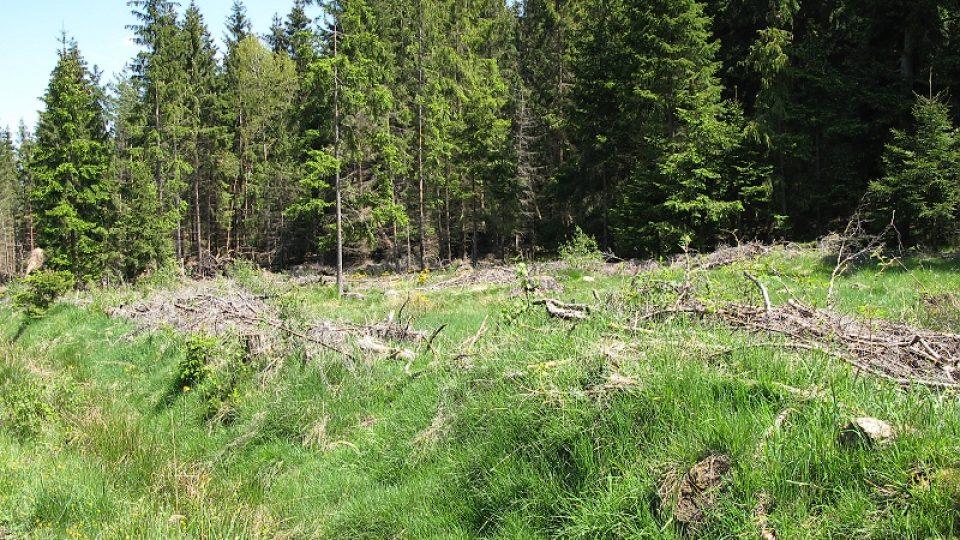 Lesní lokality v CHKO Slavkovský les