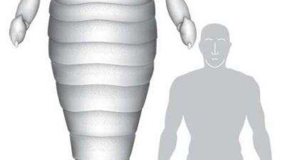 Srovnání velikosti kyjonožce a člověka
