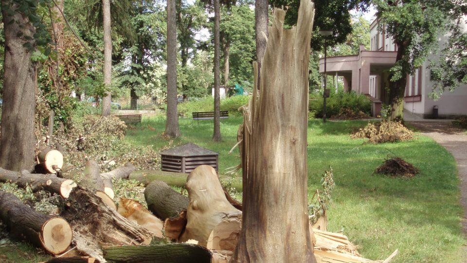 Poničené arboretum Hamzovy léčebny