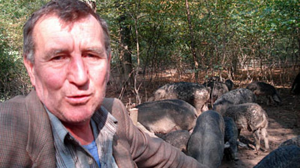 Srbský chovatel  mangulic
