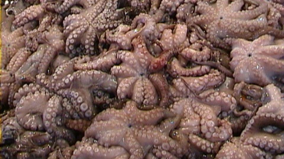 Chobotnice je tu jídlem, i symbolem