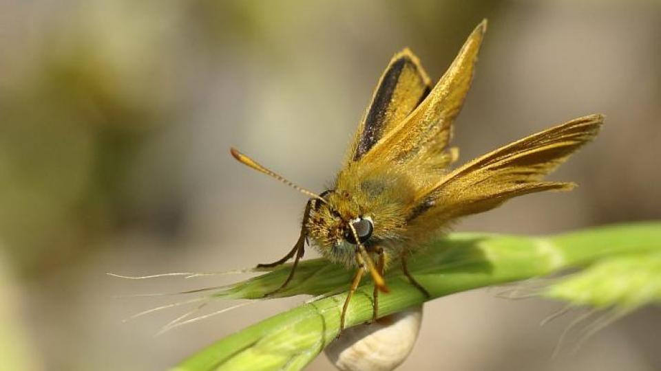 datování motýlů seznamka chlap online hodinky