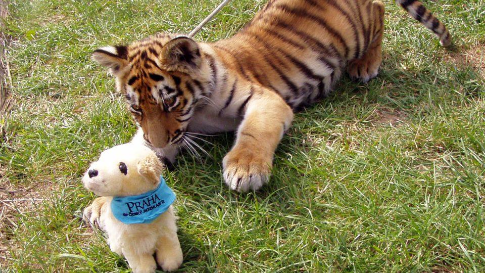 tygr ussurijský Chico s rádiovým plyšovým psem