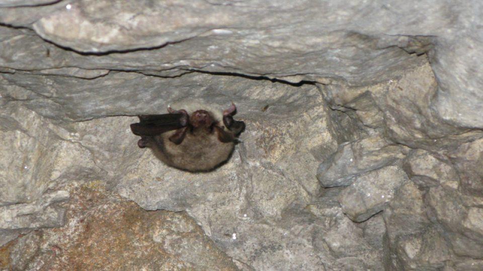 Ze sčítání netopýrů v Alkazaru