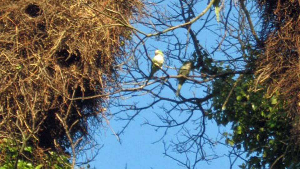 Papoušci u svých hnízd