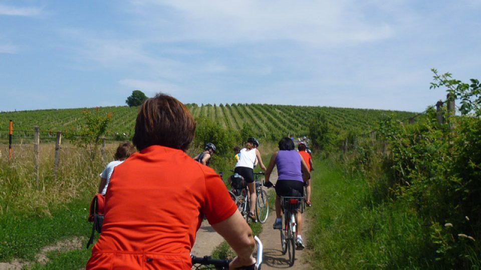 Typický pohled na cyklisty na vinařských stezkách