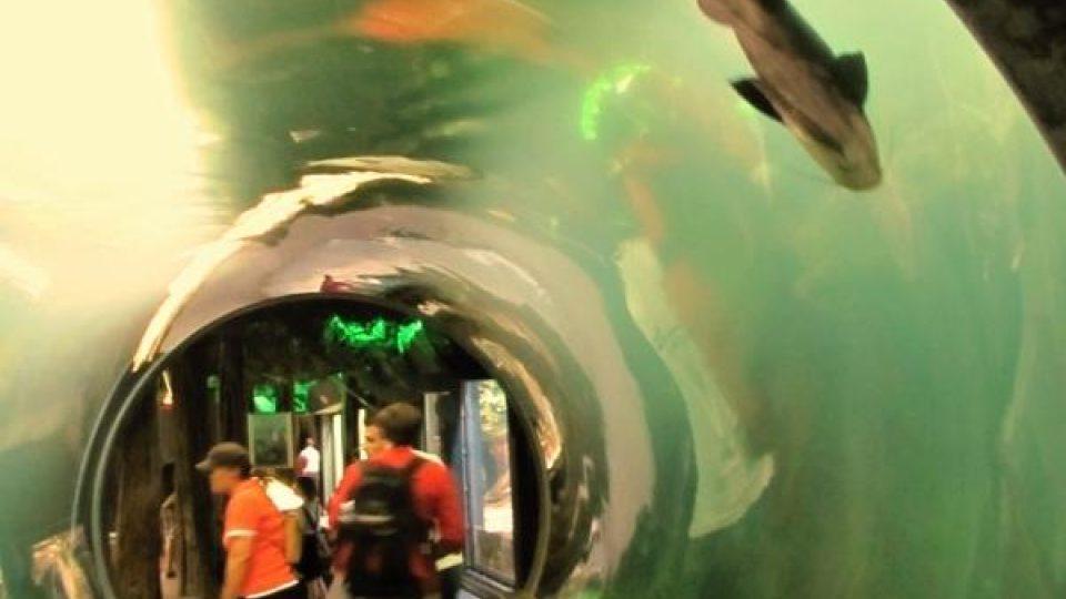 V tunelu pod hladinou
