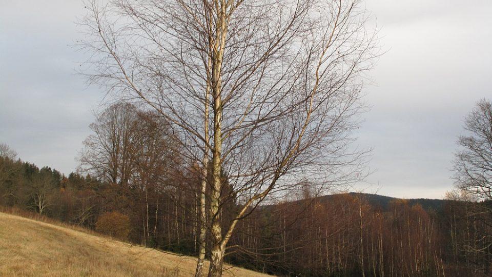 13. Strom, pod kterým je bunkr