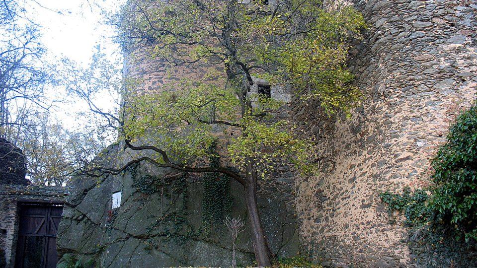 Mohutné zdi středověkého Nového Hrádku uprostřed NP Podyjí