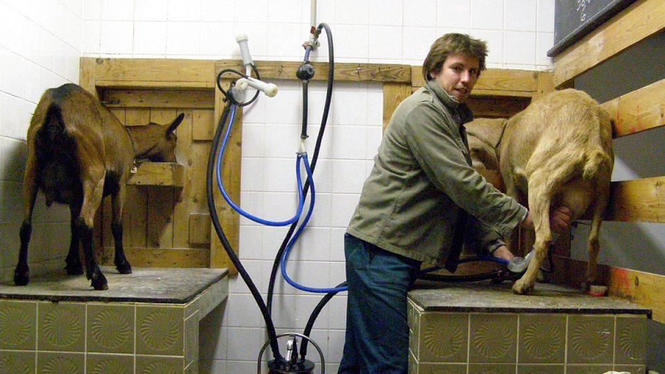 Ondra Malina při dojení koz na farmě v Nové Vísce v regionu Českého Švýcarska