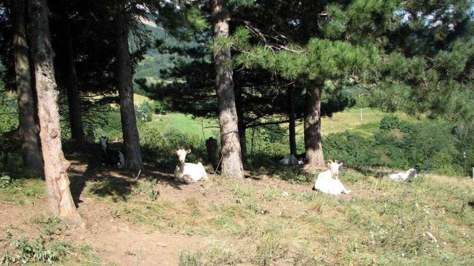 Poklidný život bez stresu velkoměsta našel Nikola Banković mezi kozami