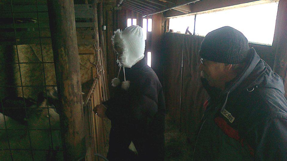 Markéta Kraiplová ve stáji  pro kozy u krkonošské Lesní boudy