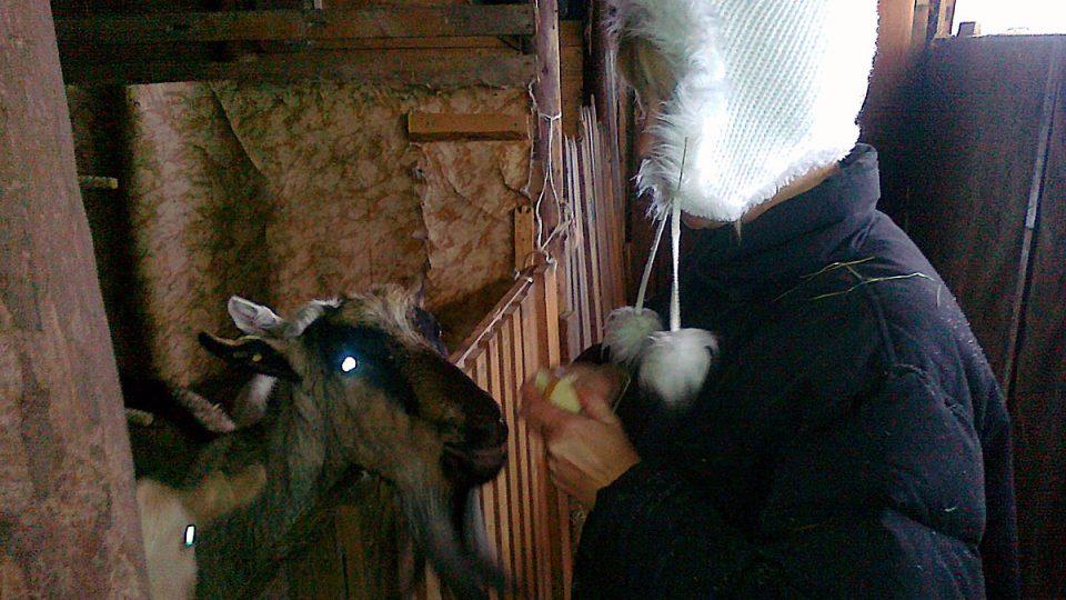 Ekofarmářka Markéta Kraiplová provozuje farmu na vrcholcích Krkonoš od roku 2009