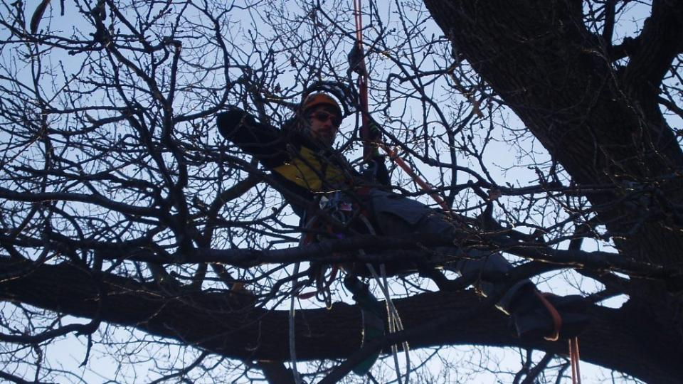 300 let starý dub u Postřižína (7)