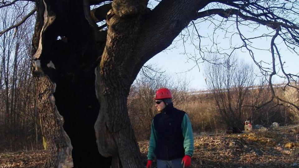 300 let starý dub u Postřižína (6)
