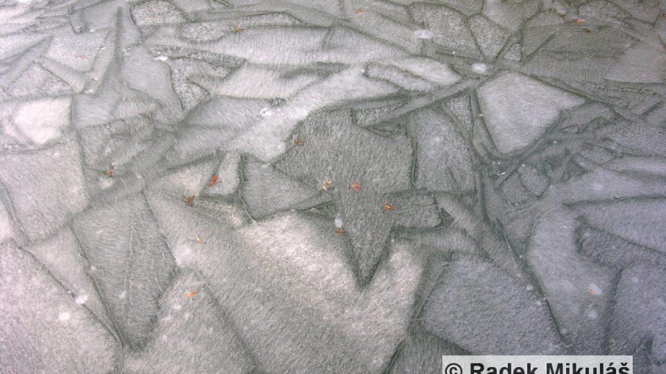 Ledová deska se promrzáním mění v monokrystaly (Podhradská tůň v Kokořínském Dole)
