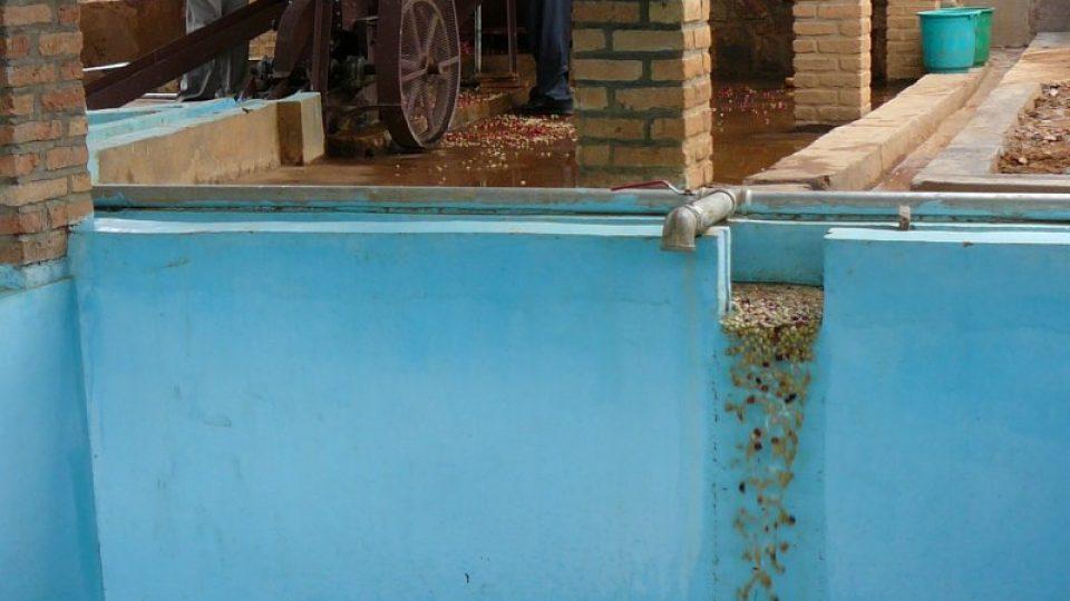 """V kádích se zrnka fermentují, aby se zbavila zbytku nepotřebných """"slupek"""" a dotvořila se jejich chuť"""