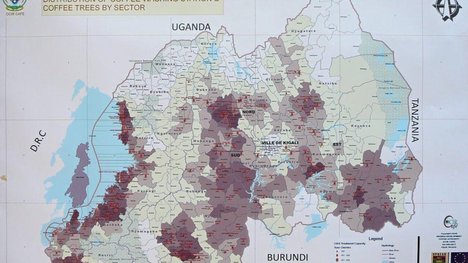 Káva se pěstuje téměř po celé rozloze Rwandy, hlavně u jezera Kivu na západě země