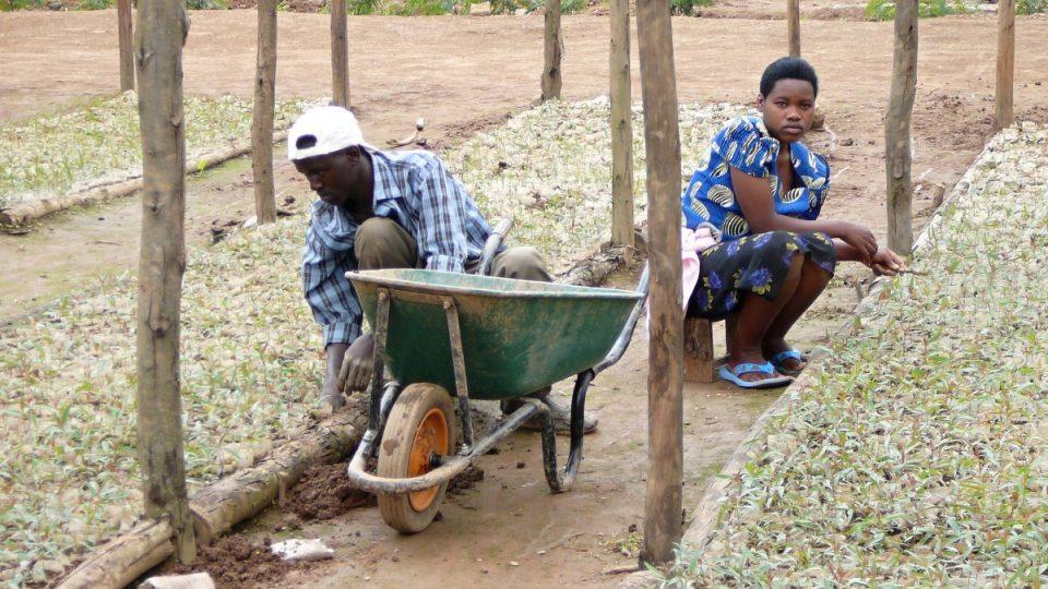 V málokteré africké zemi pracují vedle sebe muži i ženy. Ve Rwandě je to běžné