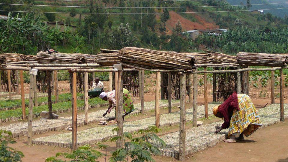 Vláda prosazuje také program zalesnění některých kopců. Sazenice se pěstují ve školkách podporovaných ze zahraniční rozvojové pomoci