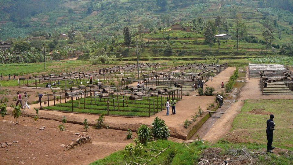 Pěstování kvalitní kávy ve Rwandě podporuje také Evropská unie