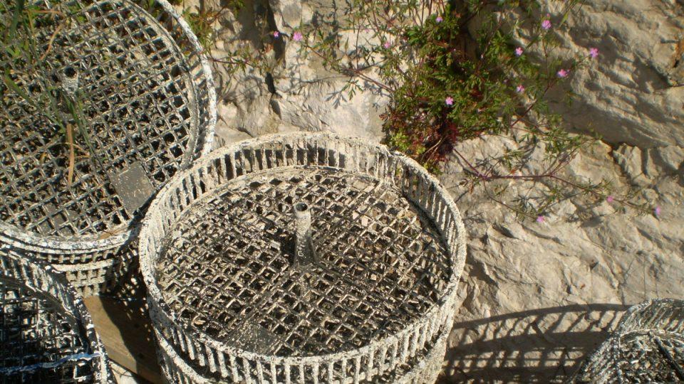 Ústřice jsou ve vodě uchovávány ve speciálních koších