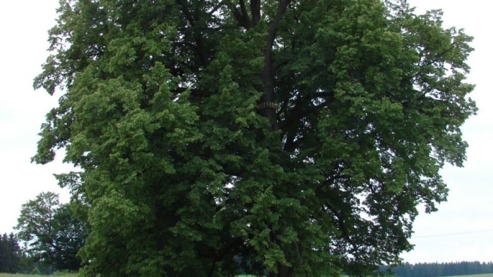 Zámeček Lipka - 600 let stará Lípa