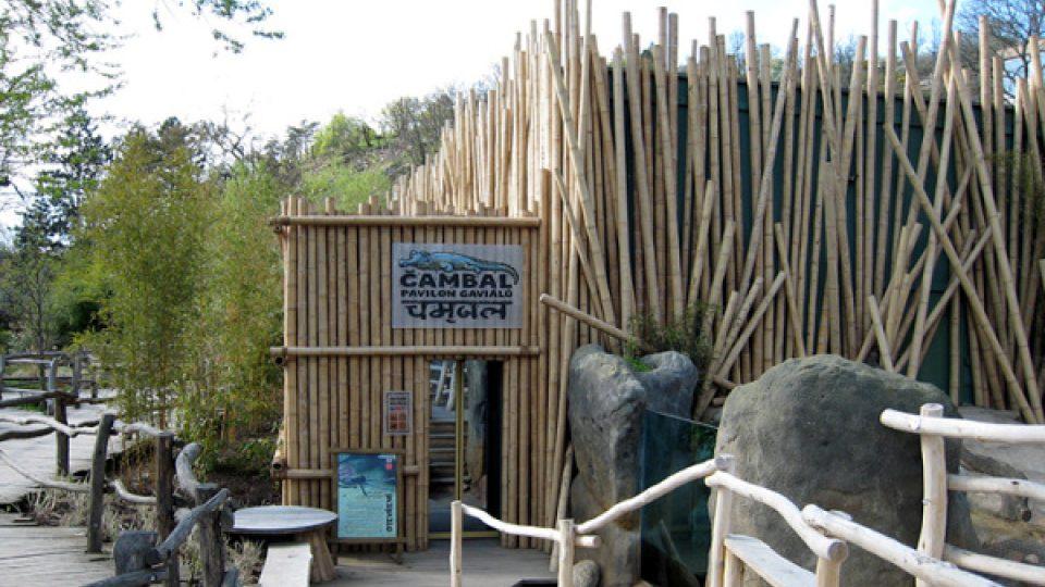 Pavilón gaviálů v pražské zoo byl vybudován v roce 2007 a nese název Čambal – po indické rezervaci, kde tito krokodýli žijí