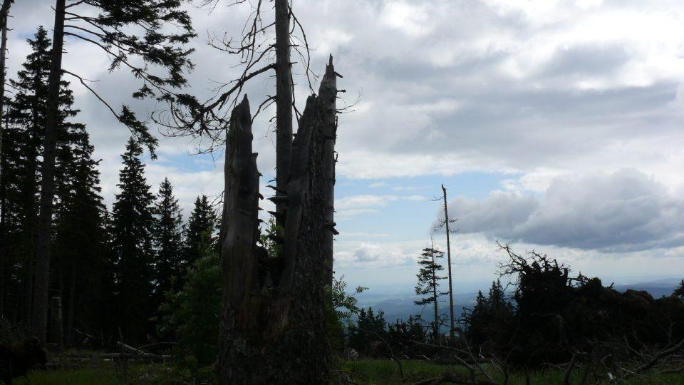 Boubínský prales XI