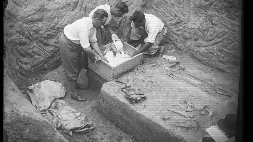 Hrob z doby stěhování národů z Čelákovic-Záluží se chystá k přesunu do Národního muzea - zalévání sádrou (archivní foto ze 30. let)