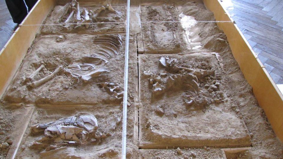 Při odkrývání hrobu se objevilo původní bednění; je dobře vidět, po jakých celcích byl hrob z Čelákovic-Záluží ve 30. letech rozřezán a transportován