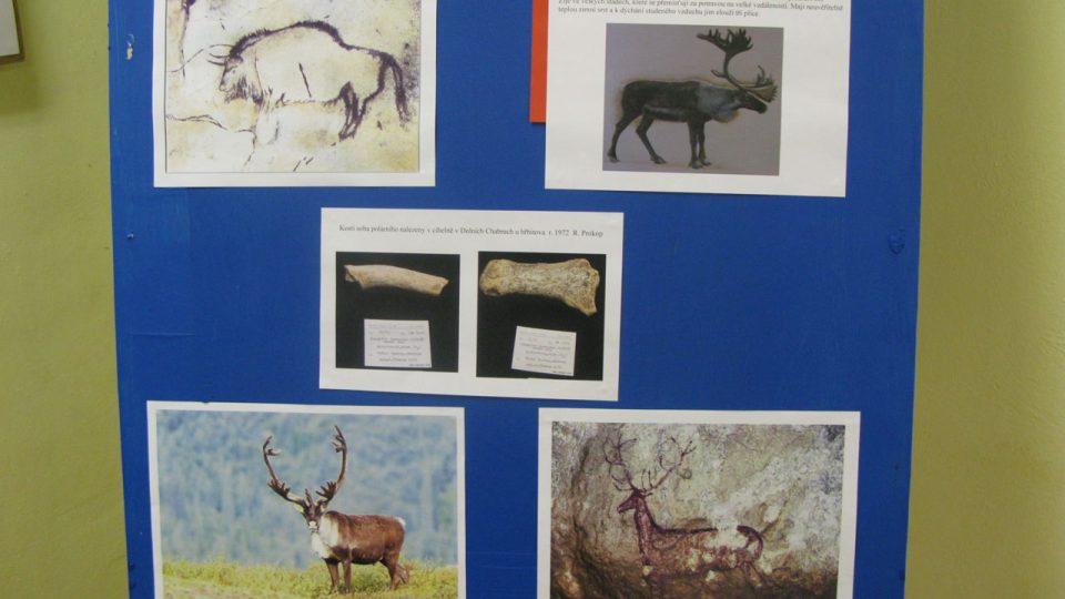 Připomenuty byly také nejzajímavější nálezy od mamutího klu až po kosti sobů a vlků