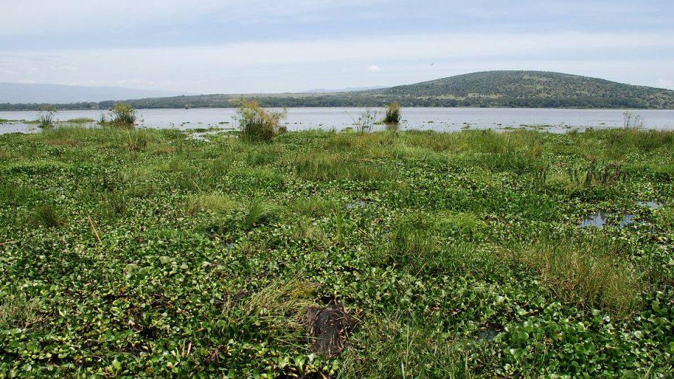 Hladina jezera zarůstá, rybáři v něm tak nemohou lovit