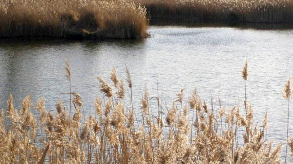 Podzim u rybníka (ilustrační foto)