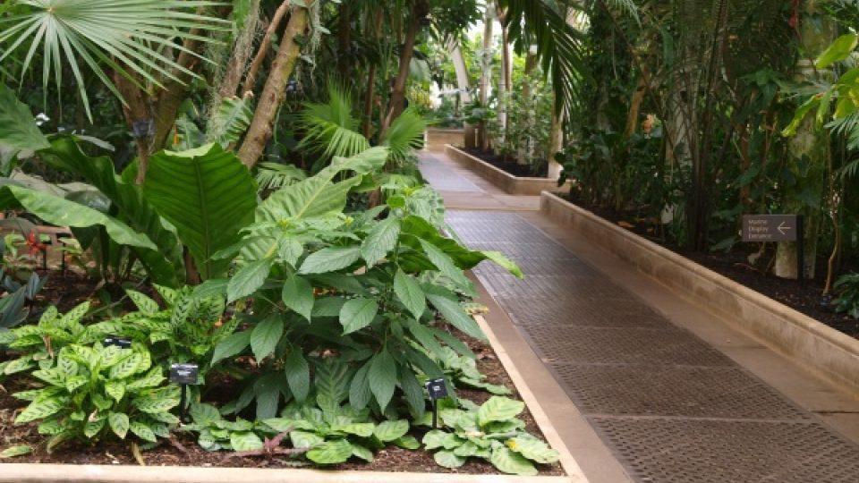 Palmy v botanické zahradě v Londýně