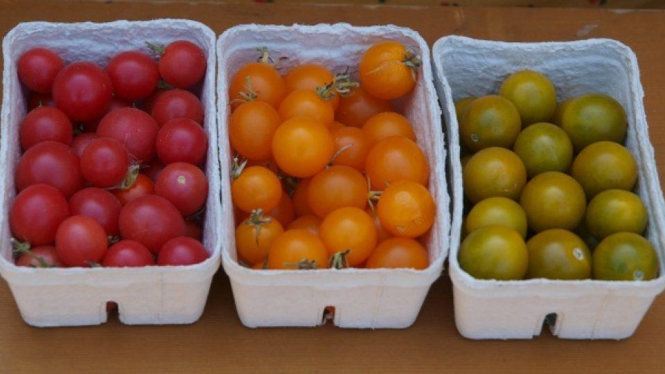 Rajčata mohou mít různou barvu