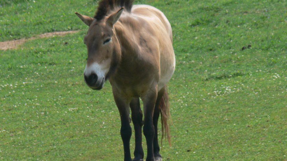 Trpělivý kůň