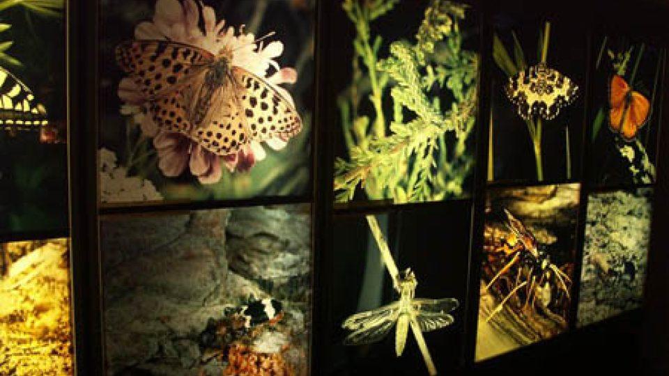 Muzeum má bohaté sbírky. Můžete v něm navštívit také přírodovědnou expozici