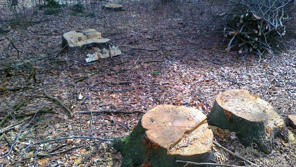 mýcení lesa