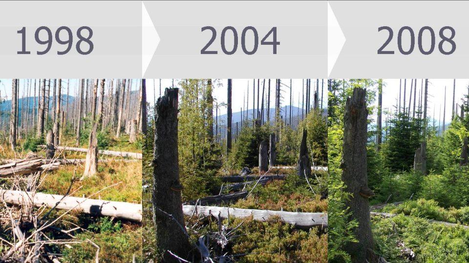 10 let vývoje lesa po kůrovcové kalamitě