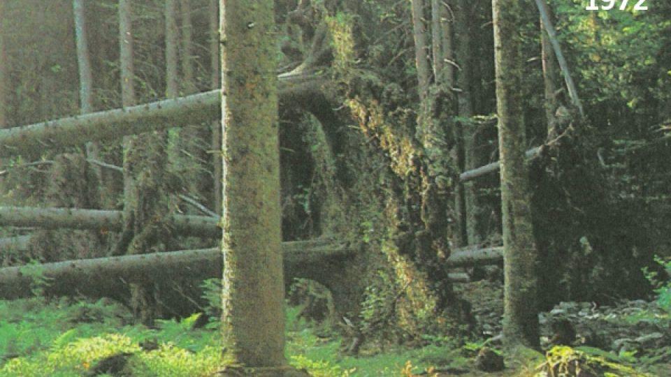 1972 - vzniká světlina v lese.