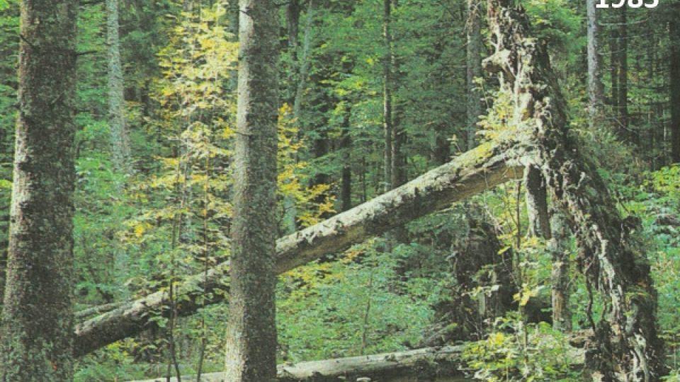 1983 - Různé druhy dřevin se přirozeně usídlily: původní povrch je již pokryt zelení.