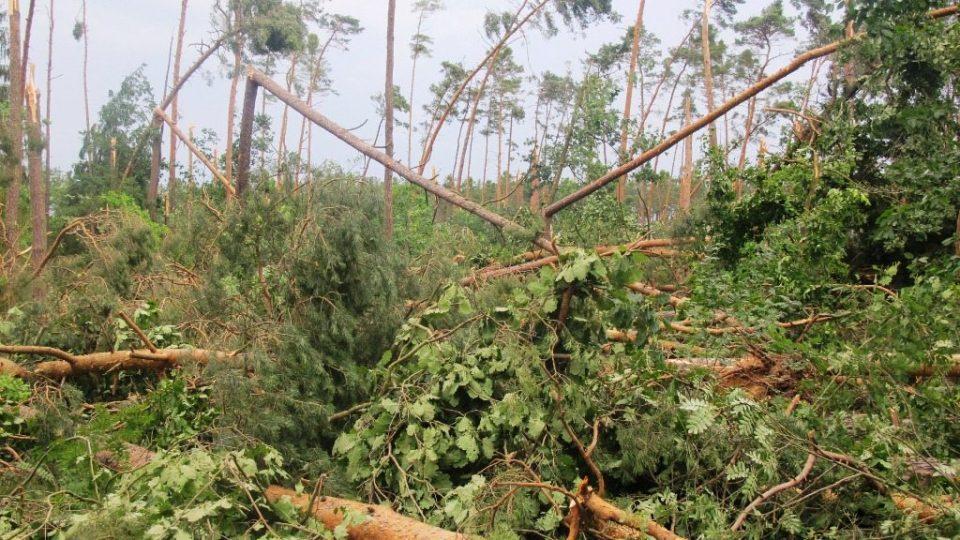Kalamitní stav v královéhradeckých lesích po ničivé bouřce