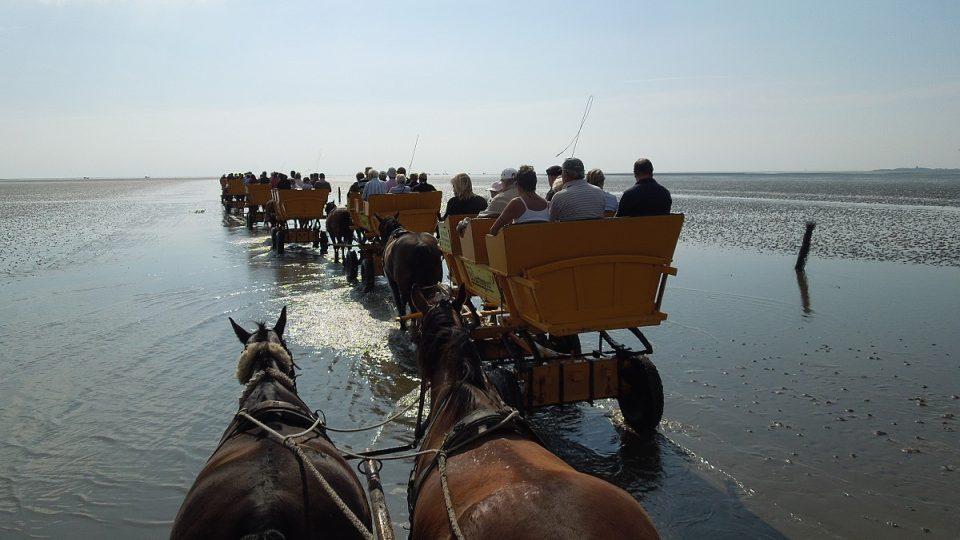 Koně táhnoucí kočáry vyrážejí k ostrovu Neuwerk