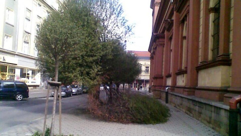 Polámaný strom v centru Ostravy u katedrály